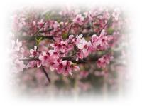 桃の花咲く吉備路 - ひとりあそび