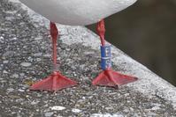 足環をつけた鳥 - そらいろのパレット