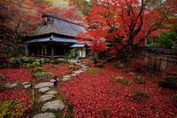 紅葉が彩る滋賀2019教林坊・秋の大団円 - 花景色-K.W.C. PhotoBlog