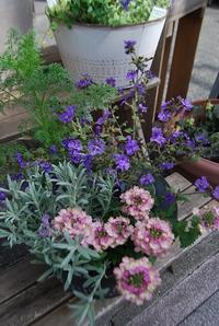 こんな時にはお花や植物をめでたい♪ - 花と暮らす店 木花 Mocca