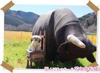 2020年3月15日田んぼをつかった花畑@伊豆旅行 - 週末は、愛犬モモと永吉、拓海とお出かけ!Kimi's Eye