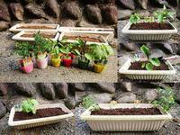 夏野菜の苗 植え付け - NATURALLY