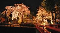 「深淵の桜」を観に千手院の境内へ④ - 浦佐地域づくり協議会のブログ