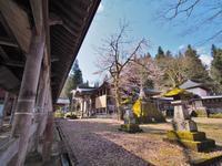 枝垂れ桜昨日は7分咲きくらいでしょうか⑤ - 浦佐地域づくり協議会のブログ