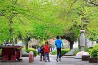 近所の春(2) - うろ子とカメラ。