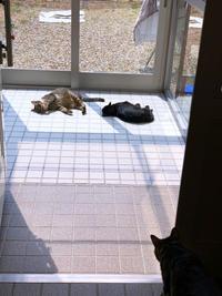 猫玄関も大人気 - にゃんず日記