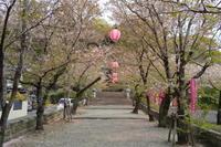 菊池神社(熊本県菊池市) - 空いいよ!どっと混む♪