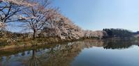4月8日の桜巡り/童里夢公園なかじま @福島県中島村 - 963-7837