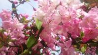 桜餅とみたらし団子 - ゆず空パン工房