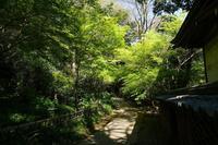 新緑の深大寺~前編 - 柳に雪折れなし!Ⅱ