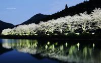 赤穂山八天桜ライトアップ - A  B  C