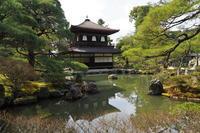 銀閣寺(の桜?) - Taro's Photo