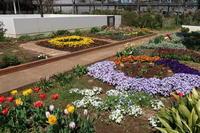 チューリップ、キンセンカ、忘れな草・・・2020年4月中旬のマンション花壇 - ニッキーののんびり気まま暮らし