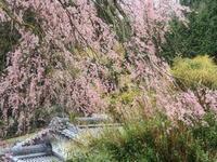 桜 16奈良県 - ty4834 四季の写真Ⅱ