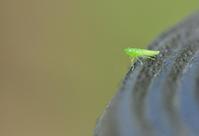 アリグモのお食事♪ - *la nature*