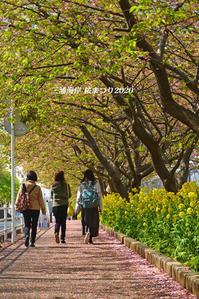 開催期間短縮 『三浦海岸桜まつり2020』③ - 写愛館