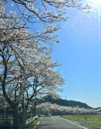 ゆく春 - 心はいつもそばにいてね