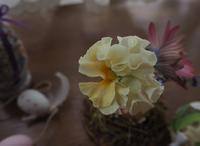 イースターエッグを飾ろう - グリママの花日記