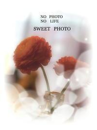 One   scene (3) - LAGOMな……PHOTO   LIFE !