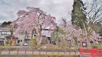 昨日は「お花見散歩」へ - 浦佐地域づくり協議会のブログ