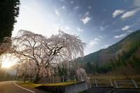 2020桜巡り@京北町魚ヶ淵の吊り橋 - デジタルな鍛冶屋の写真歩記