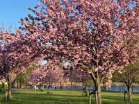 舎人公園散歩♪ - 自然と遊楽