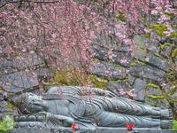 桜 17兵庫県 - ty4834 四季の写真Ⅱ