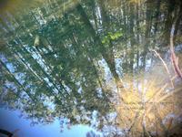 * 水のきれいなところ - Kaara's Eye