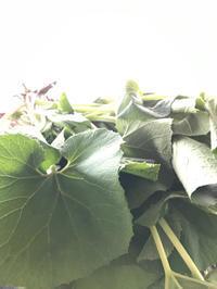 島根県でも新型コロナウイルスの感染者が確認され、 - 奈良 京都 松江。 国際文化観光都市  松江市議会議員 貴谷麻以  きたにまい