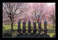 六地蔵と桜 - Desire