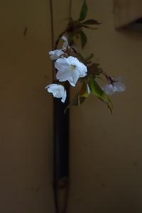 季節は前へ - g's style day by day ー京都嵐山から、季節を楽しむ日々をお届けしますー