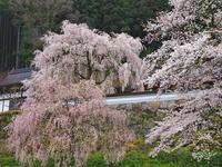 桜 18兵庫県 - ty4834 四季の写真Ⅱ