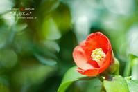 ひと花 - Rey Photo