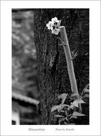 咲きたい! - Minnenfoto