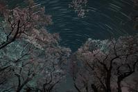 夜桜と - yama10フォトライフ
