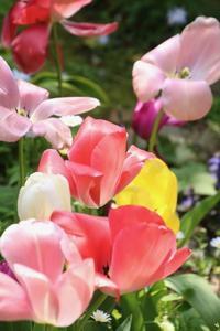 咲き終わりも始めも盛りの時期もいずれも美しい - 光さんの日常2