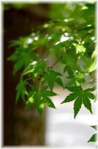 新緑の季節 - Less is more