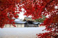 紅葉が彩る京都2019秋の終わりに(京都御苑) - 花景色-K.W.C. PhotoBlog