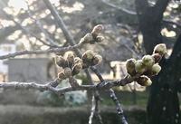 桜の生命(いのち)の循環を楽しむ - ライブ インテリジェンス アカデミー(LIA)