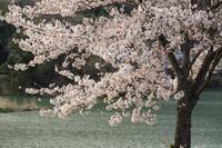 春を見送る - 風の彩り-2