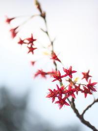 陽光桜、その後 - MPG