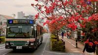 桜からハナミズキへ… - 黄色い電車に乗せて…