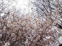 花曇り - 標高1,100メートルの悦楽