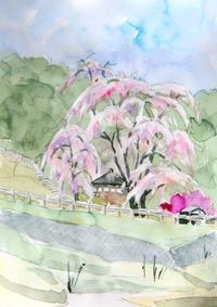 枝垂れ桜-高遠 - ryuuの手習い
