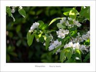 若葉 - Minnenfoto
