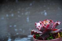 大雨 - ひな日記