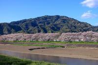 朝比奈川の桜並木と高草山 - やきつべふぉと
