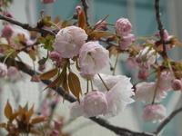 4月26日新潟と4月29日群馬再延期だそうです。 - 上杉昇さんUnofficialブログ ~Fragmento del alma~