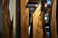 樹齢のある杉の断片 - SOLiD「無垢材セレクトカタログ」/ 材木店・製材所 新発田屋(シバタヤ)