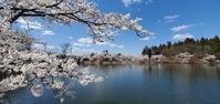 4月11日の桜巡り/中池公園@福島県玉川村 - 963-7837